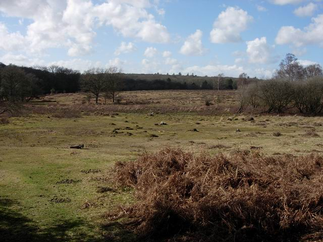 Heathland near Bolderwood