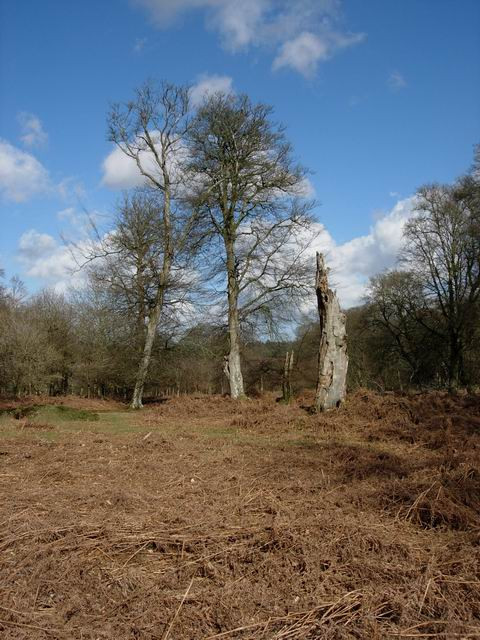 Bratley Wood