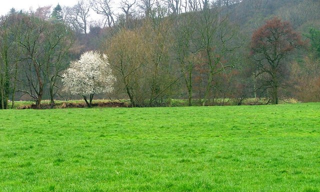Trees Aligning the Banks of the River Leven