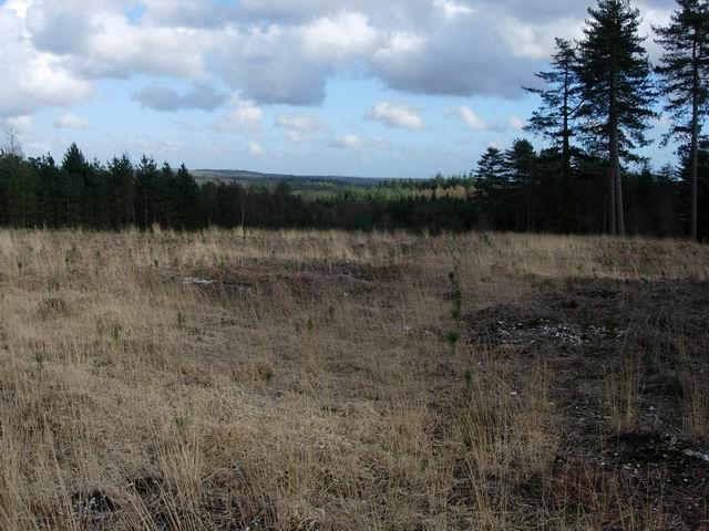 Cleared area in Highland Water Inclosure