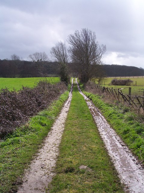 Track to Westhide Wood between April Showers