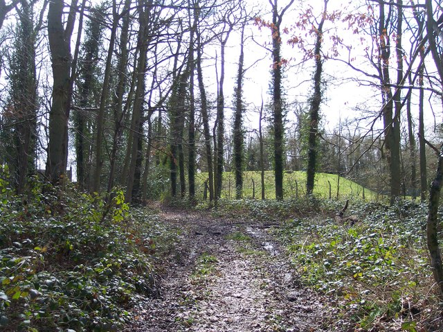 Reservoir from Westhide Wood
