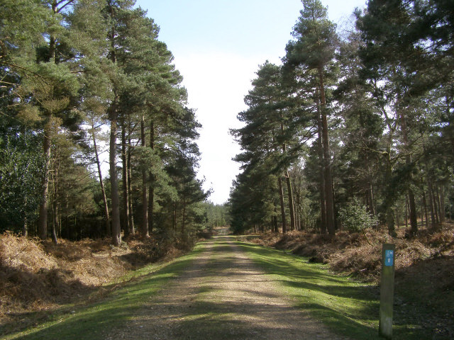 Cycle route through Slufters Inclosure, New Forest