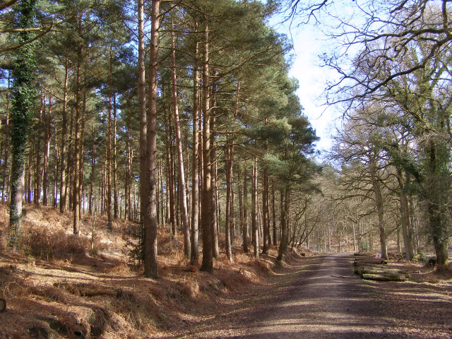 Appleslade Inclosure, New Forest