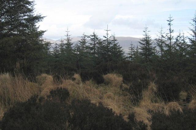 Ghlinne Bhig Forest