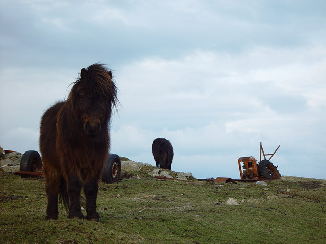 Shetland Ponies and Iron Horse, Huxter, Whalsay, Shetland