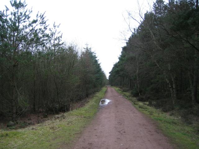 Forestry Track, Devilla