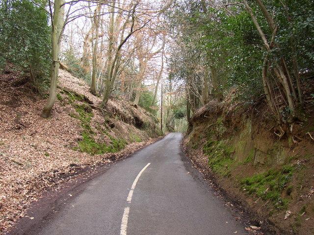 Road through the wood, Shackleford