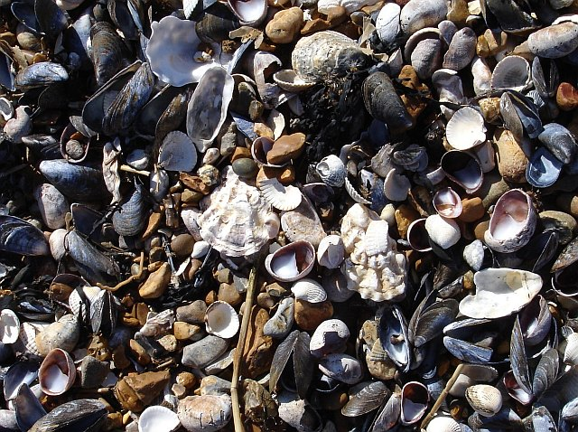 Close-up of the beach, Seasalter