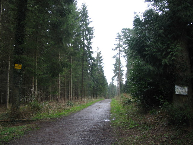 Cycle path in Longleat Forest