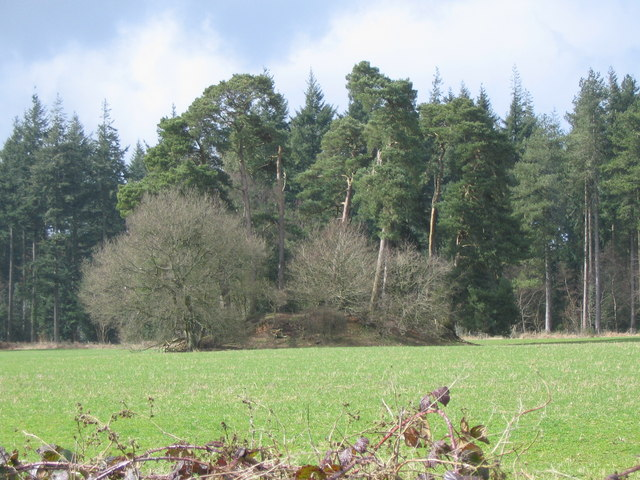 Tumulus near Bradley Road