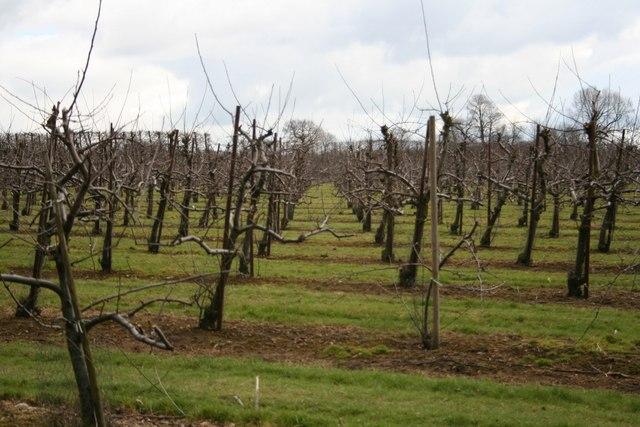 Orchard at Loddington Farm