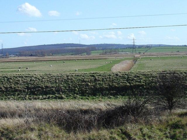 View across Graveney Marsh