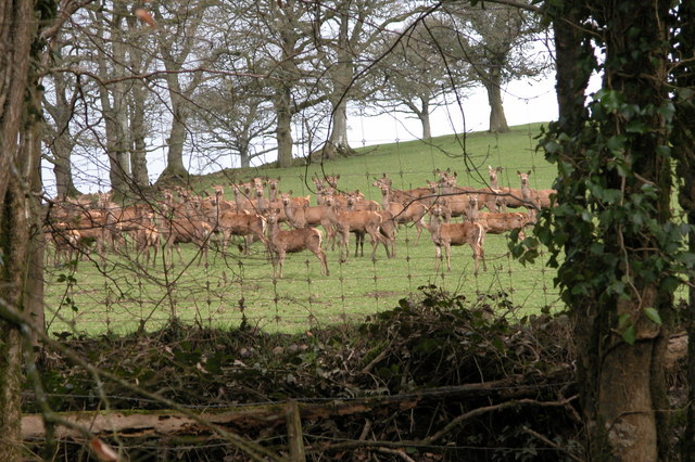 Deer in a field in the Hollocombe Water valley