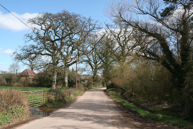 Talaton: the road from Clyst Hydon