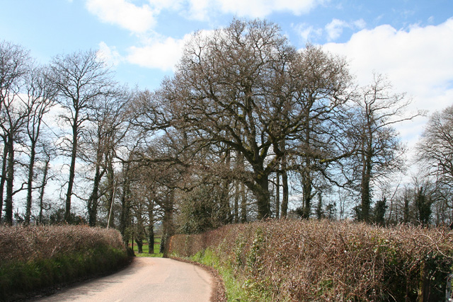 Clyst Hydon: the road from Talaton