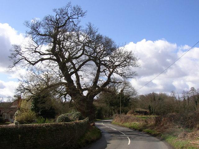 Lane near Somerset farm, Peper Harow