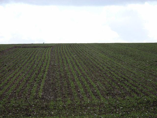Farmland above Greywell