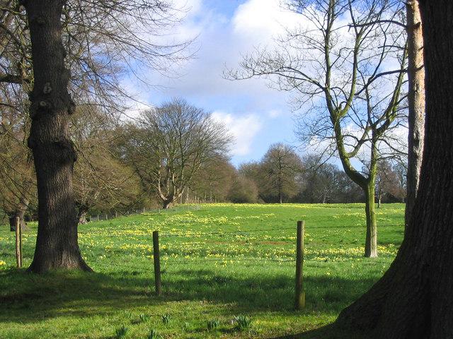 Spring at last in East Meadow
