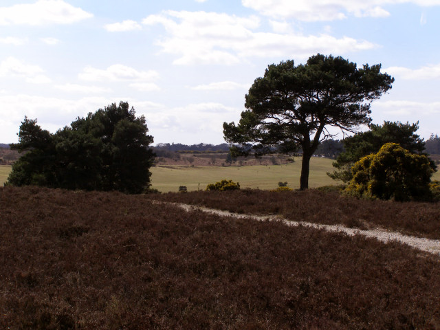 Long Slade Bottom from Hincheslea Moor, New Forest