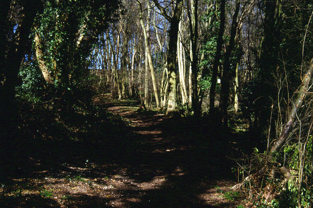 Woodland north of Cuxton