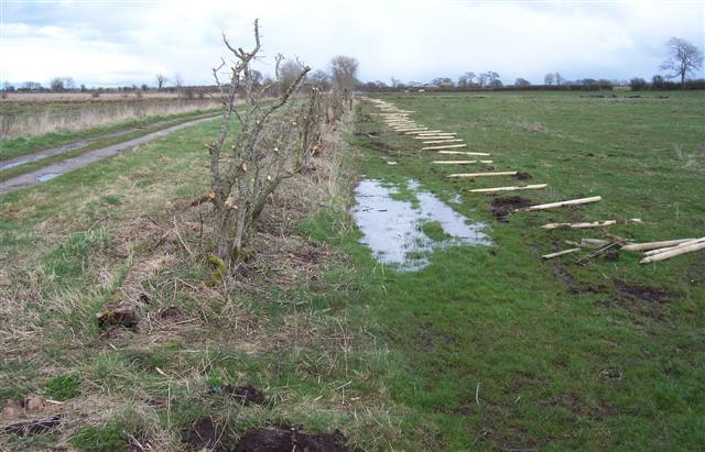 Hedging at Beck Farm.