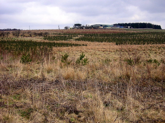 Reforestation Near Drumbow