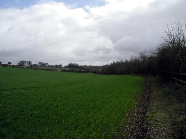 Tichborne Down