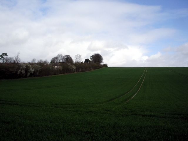 Tichborne Down, east of New Alresford
