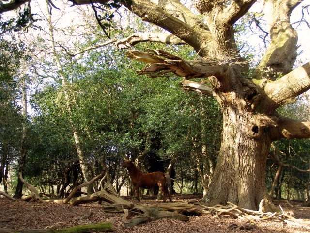 Oak in its dotage, Blackhamsley, New Forest