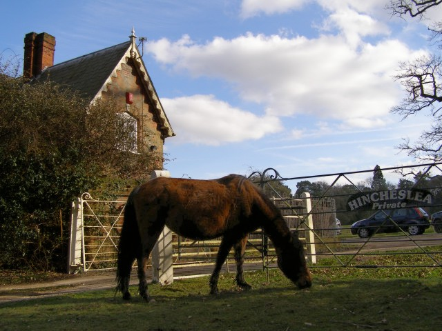 Pony grazing at the gate to Hincheslea House, New Forest