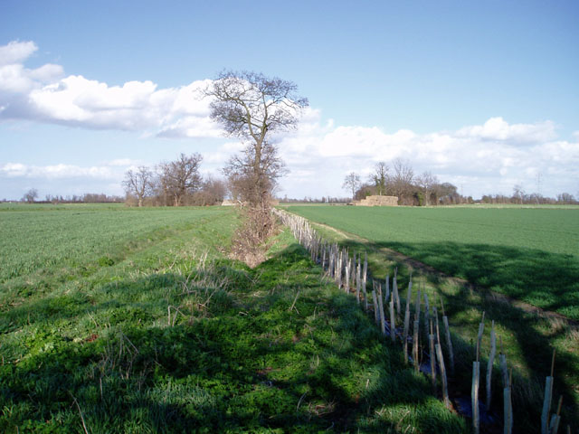 Hedge planting near Horningsea