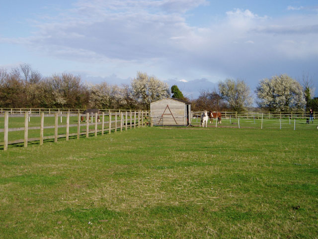 Horses at Eye Hall Farm