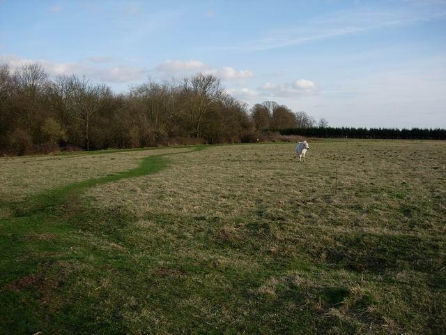 Great Testwood Farm
