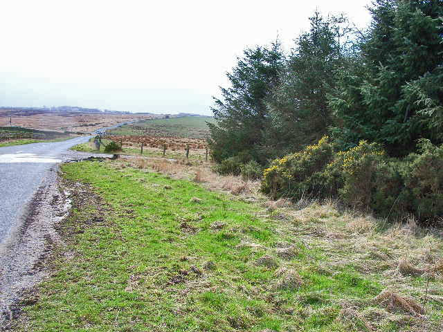 Plantation and moorland, Tow Law to Cornsay road