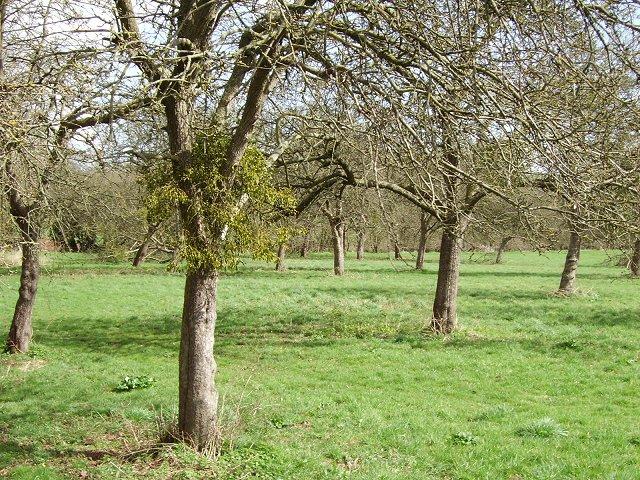 Orchard, Calderwell Bridge