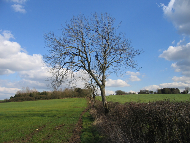 Footpath past Hodnell Manor
