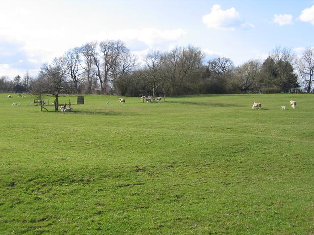 Sheep near Saville's Pool