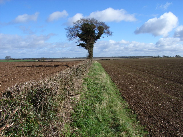 Hedgerow near Five Lanes End