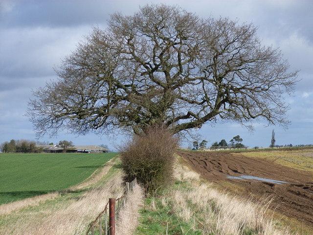 Farmland near Upper House Farm