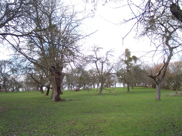 Old Perry Orchard, Kymin