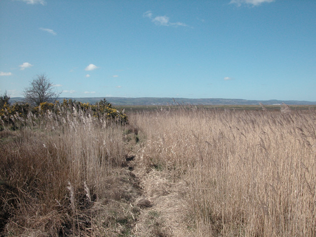 Dee Marshes