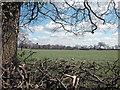 SJ3572 : Woodbank by Dennis Turner