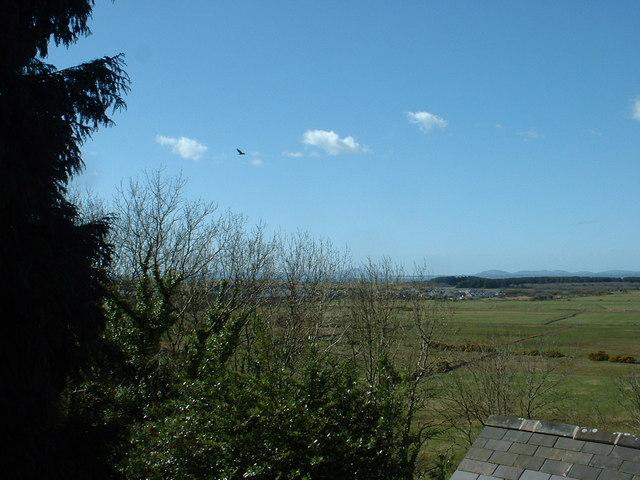 Buzzard over Harlech