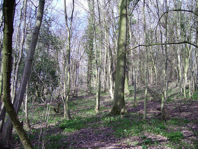 Saltmoor Wood.