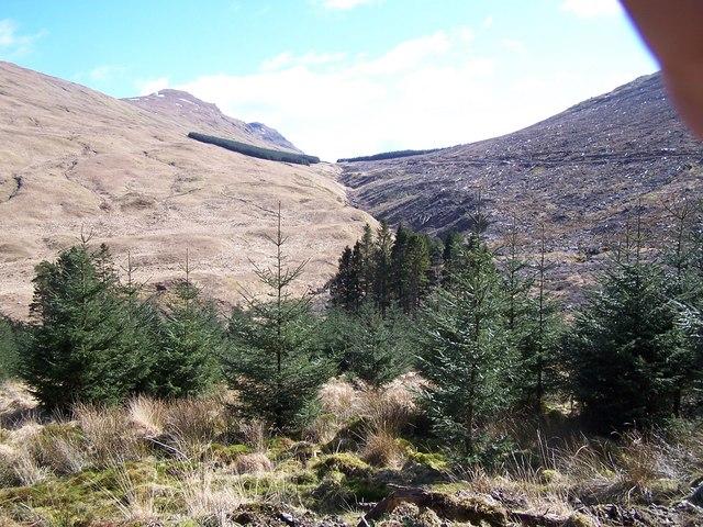 Beinn Lagan Forestry