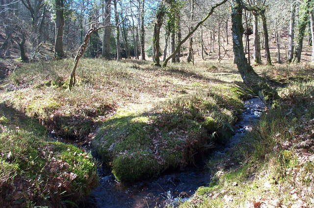 Streams in Slaughterhouse Combe.