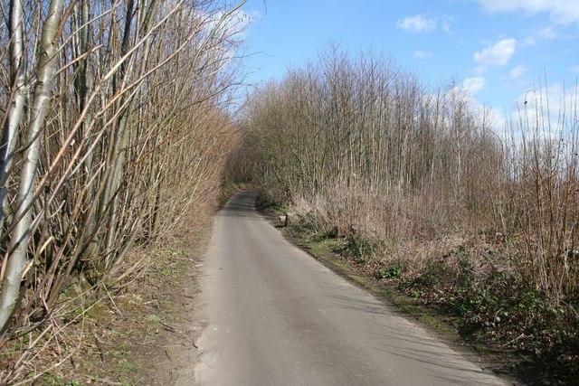 North Pole Road through Oaken Wood