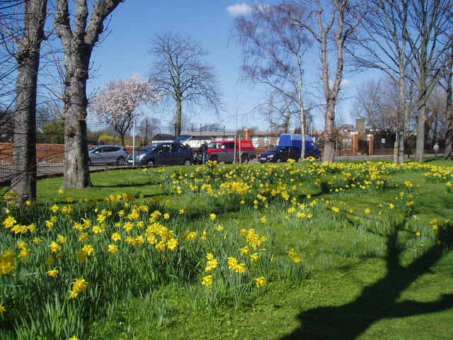 Trees and daffodils, Bedonwell Road, Bexley, Kent