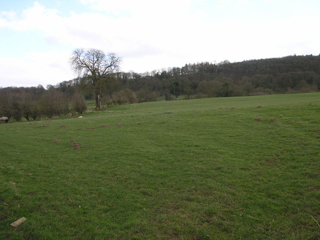 Pasture and Woods